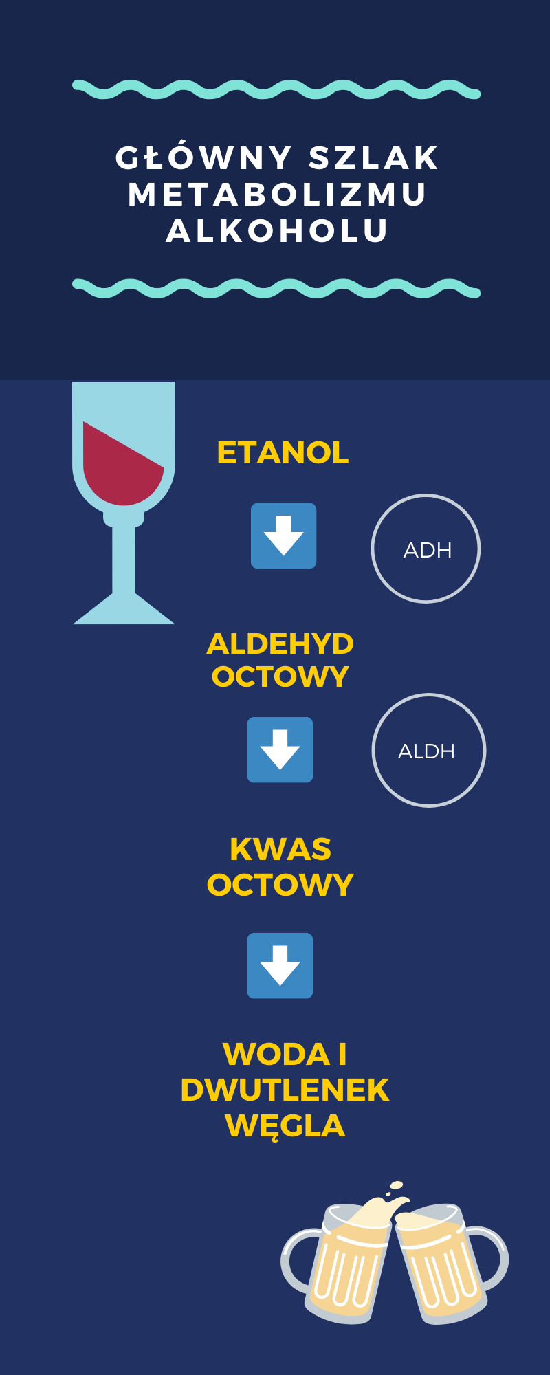 Alkohol i jego metabolizm